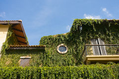 Green plants covering building on the blue sky Royalty Free Stock Photo