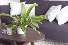 Green plants decorating a room Stock Images
