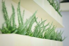 Green plants for decoration stand on the shelf. Interior Design. Closeup, soft focus. Close-up royalty free stock photo