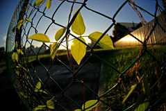 Green plants and fence Stock Images
