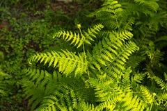 Green plants, fern Stock Image