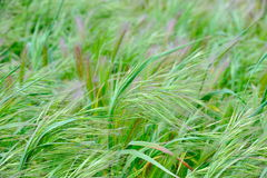 Green plants on a field in summer. As background Stock Image