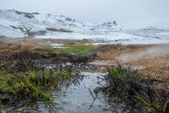 Green Plants on Flooded Field Near Snow Covered Moutain Stock Photo