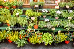 Green plants on the showcase of french market royalty free stock image