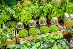 Green plants on the showcase of french market royalty free stock photos