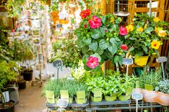 Green plants on the showcase of french market stock photo