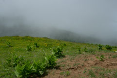 Green plants in the foreground in a meadow in the mountains and fog clouds stock photos