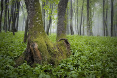 Green plants in the forest in spring stock photography