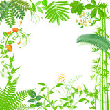 Green plants frame  Royalty Free Stock Photography