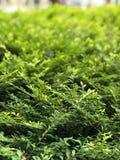 Green plants. Garden Royalty Free Stock Photo