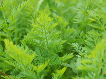 Green plants in the garden. Royalty Free Stock Photography
