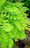 Green plants after rainfall. Green plants in the garden after a rainfall stock images