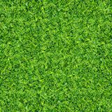 Green plants and grass Stock Photography