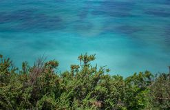 Green plants & grass against the blue water of the Atlantic Ocean in Algarve, Portugal, Europe. stock photography