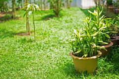 Green plants on grass field in the garden Royalty Free Stock Image