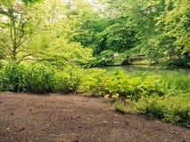 Green plants grass in park or garden outdoor Stock Image