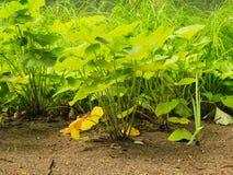 Green plants grass in park or garden outdoor Stock Photography