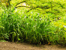 Green plants grass in park or garden outdoor Stock Photography