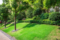 Green plants and grass Royalty Free Stock Photo