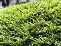 Green plants. Garden Royalty Free Stock Images