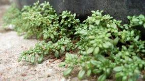 Green Plants on Ground Stock Photos