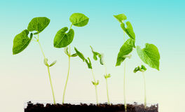 Green plants grow Stock Images