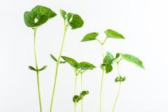 Green plants grow Royalty Free Stock Photos