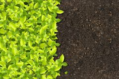 Green plants growing. On soil manure royalty free stock image
