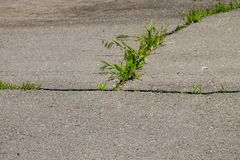 Green plants growing in cracked asphalt road texture. Green plants growing in the cracked asphalt road texture stock images