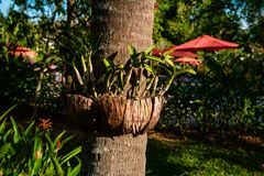 Creative arrangement of flowerpots on tree. Green plants growing in decorative organic flowerpots composed around tree trunk, Thailand stock images