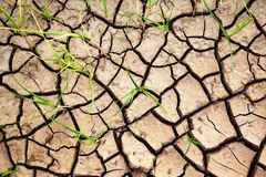 Green Plants Growing From Cracked Earth Royalty Free Stock Photography