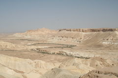 Green plants growing in Negev riverbed Royalty Free Stock Photo