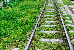 Green plants growing by the railroad tracks Stock Photos