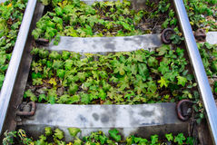 Green plants growing by the railroad tracks Royalty Free Stock Photo
