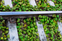 Green plants growing by the railroad tracks Royalty Free Stock Photos