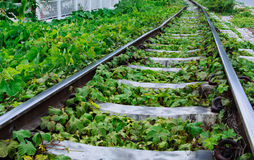 Green plants growing by the railroad tracks Stock Photo