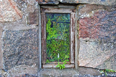 Green plants growing through a wooden window Royalty Free Stock Image