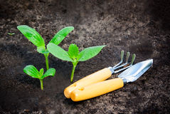 Green plants grows from the ground and garden tools Royalty Free Stock Images