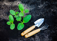 Green plants grows from the ground with garden tools Stock Photos