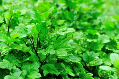 Green plants in growth Stock Photo
