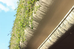 Green plants hanging on the wall under sunshine Royalty Free Stock Photography