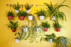 Green plants hanging on yellow wall stock photo