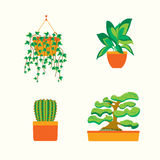 Green Plants for Home or Office. Vector Stock Photos
