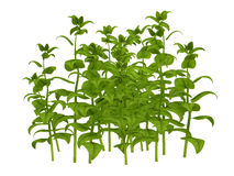 Green plants illustration Stock Images