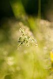 Green plants isolated on natural background with beautiful bokeh Royalty Free Stock Image