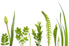Green Plants Isolated on White Background Royalty Free Stock Image