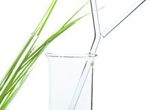 Green plants in laboratory equipment Royalty Free Stock Photography