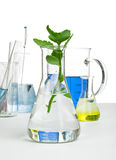 Green plants in laboratory equipment Royalty Free Stock Photos