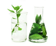 Green plants in laboratory equipment Stock Image