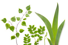 Green Plants Leaves  on White Background Royalty Free Stock Photos